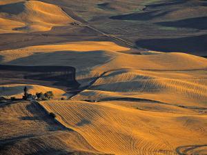 Wheat Fields, Palouse Region, Washington State, USA by Walter Bibikow
