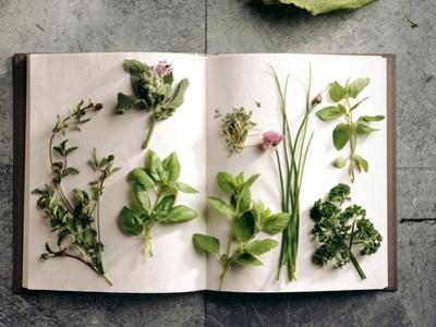 Various Salad Herbs on an Open Book by Walter Cimbal