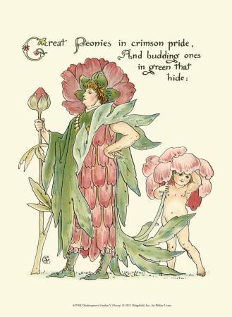 Shakespeare's Garden V (Peony)