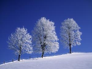 Hoar Frost on Trees by Walter Geiersperger
