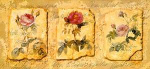 Secret Garden IV by Walter Kano