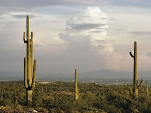 Desert Landscape and Towering Clouds by Walter Meayers Edwards