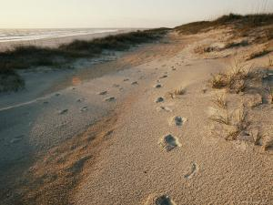 Footprints on the Beach by Walter Meayers Edwards