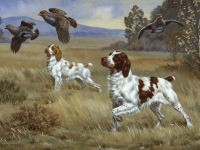 Brittany Spaniels Flush Three Birds from Cover in a Meadow