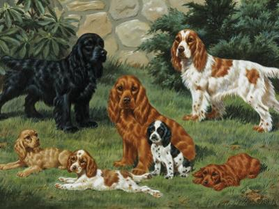 Portrait of American Cocker Spaniels of Three Color Classes by Walter Weber
