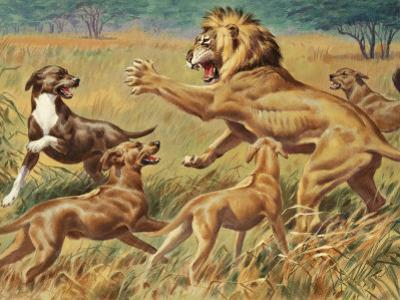 Rhodesian Ridgebacks Corral a Lion for a Hunter by Walter Weber