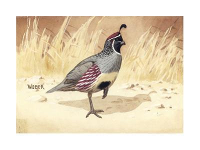Stamp Art - Gambels Quail by Walter Weber