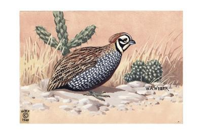 Stamp Art - Mearns Quail by Walter Weber