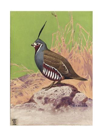 Stamp Art - Mountain Quail by Walter Weber