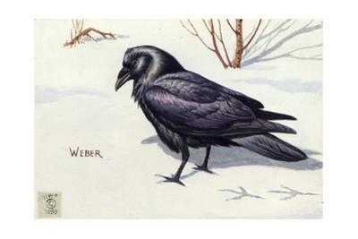 Stamp Art - Northern Raven by Walter Weber