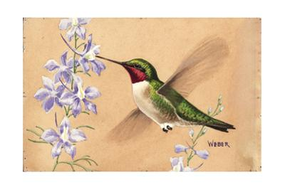 Stamp Art - Ruby Throated Hummingbird by Walter Weber