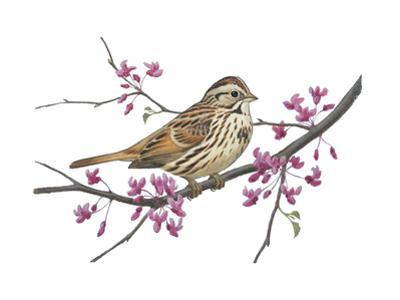 Stamp Art - Song Sparrow by Walter Weber