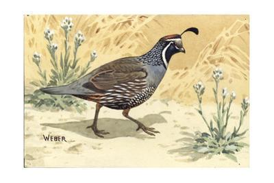 Stamp Art - Valley Quail by Walter Weber