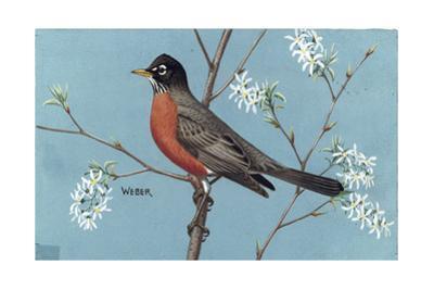 Stamp Art - Western Robin