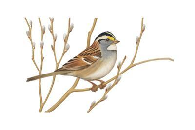 Stamp Art - White Throated Sparrow by Walter Weber