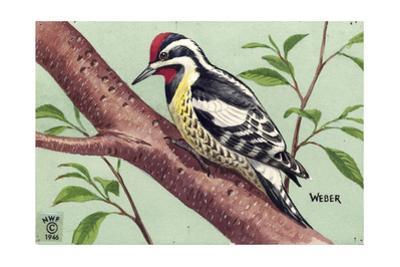 Stamp Art - Yellow Bellied Sapsucker by Walter Weber