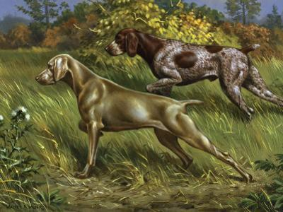 Weimaraner and German Short-Haired Pointer Point to Prey in Field by Walter Weber