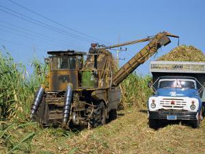 Cutting Sugar by Cuban Made Machine, on a Plantation, South Coast Plain of Havana Province, Cuba by Waltham Tony