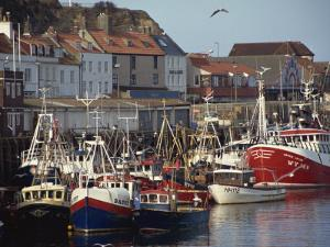 Fishing Fleet in Harbour, Whitby, North Yorkshire, England, United Kingdom, Europe by Waltham Tony