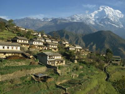 Houses and Terraced Fields at Gurung Village, Ghandrung, with Annapurna South, Himalayas, Nepal