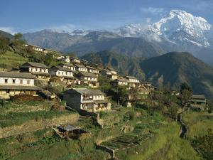 Houses and Terraced Fields at Gurung Village, Ghandrung, with Annapurna South, Himalayas, Nepal by Waltham Tony