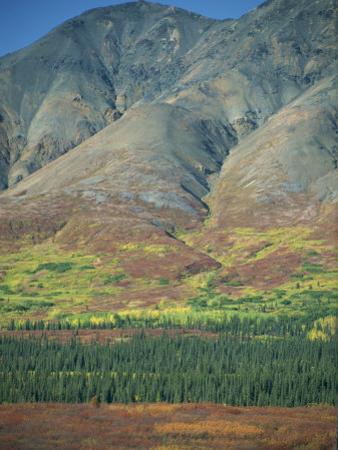Tundra, Broad Pass, Denali National Park, Alaska Range, Alaska, USA