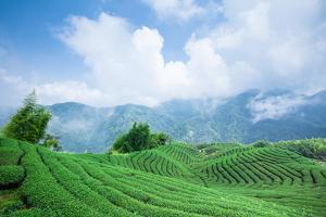 Eight Trigrams Tea Garden by Wan Ru Chen