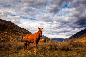 Horses in the Autumn Landscape by Wan Ru Chen