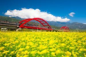 Train through Rapeseed Flower Field by Wan Ru Chen