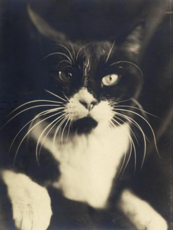 Cat Minus Me, Photograph Used in the Superimposed Photo Me and Cat by Wanda Wulz