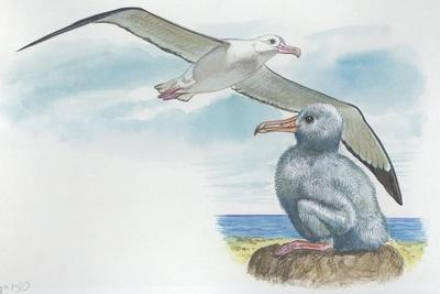 https://imgc.allpostersimages.com/img/posters/wandering-albatross-diomedea-exulans-with-chick_u-L-PVEDFW0.jpg?p=0