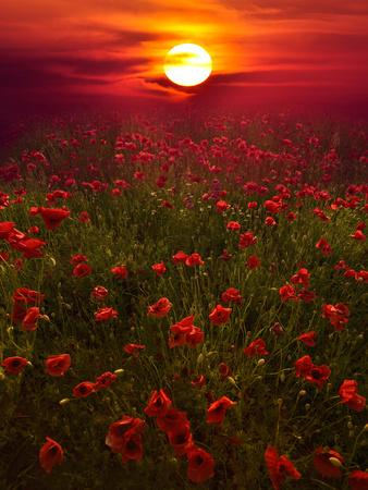 https://imgc.allpostersimages.com/img/posters/warm-sunset_u-L-PHF4TQ0.jpg?p=0