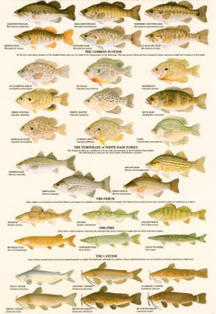 Warmwater Gamefish of North America