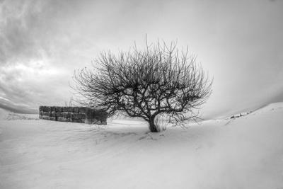 https://imgc.allpostersimages.com/img/posters/washington-apple-tree-and-hay-bales-in-winter-with-storm-clouds_u-L-Q12T8U30.jpg?artPerspective=n