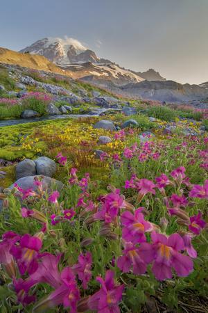 https://imgc.allpostersimages.com/img/posters/washington-lewis-s-monkeyflower-along-panorama-trail-and-paradise-river-mt-rainier-national-park_u-L-Q12T7G00.jpg?p=0