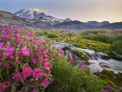 https://imgc.allpostersimages.com/img/posters/washington-lewis-s-monkeyflower-along-panorama-trail-and-paradise-river-mt-rainier-national-park_u-L-Q12T7H70.jpg?p=0