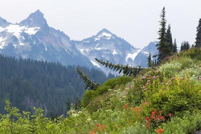 https://imgc.allpostersimages.com/img/posters/washington-mount-rainier-national-park-alpine-meadow-and-the-tatoosh-range_u-L-PU3FR70.jpg?p=0