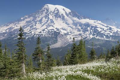https://imgc.allpostersimages.com/img/posters/washington-mount-rainier-national-park-avalanche-lilies-and-mount-rainier_u-L-PXRSVQ0.jpg?p=0