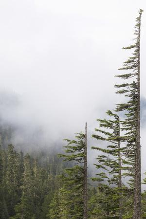 https://imgc.allpostersimages.com/img/posters/washington-mount-rainier-national-park-evergreen-trees-in-fog_u-L-PU3EYY0.jpg?p=0
