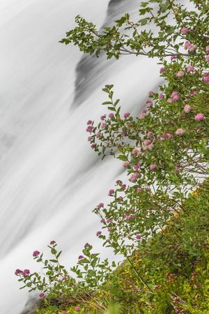 https://imgc.allpostersimages.com/img/posters/washington-mount-rainier-national-park-flowers-and-waterfall-in-paradise-creek_u-L-PU3FSG0.jpg?artPerspective=n