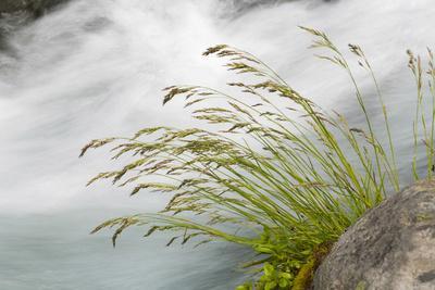 https://imgc.allpostersimages.com/img/posters/washington-mount-rainier-national-park-grass-and-rushing-water_u-L-PU3EZD0.jpg?p=0