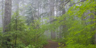 https://imgc.allpostersimages.com/img/posters/washington-mount-rainier-national-park-trail-in-forest_u-L-PU3F210.jpg?artPerspective=n