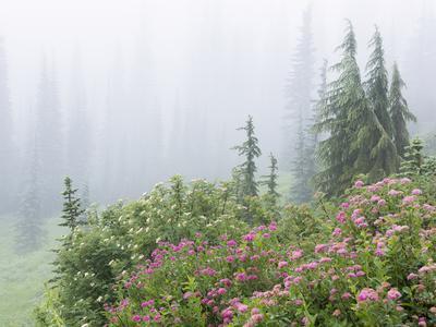 https://imgc.allpostersimages.com/img/posters/washington-mount-rainier-national-park-wildflowers-in-misty-forest_u-L-PU3FQL0.jpg?artPerspective=n