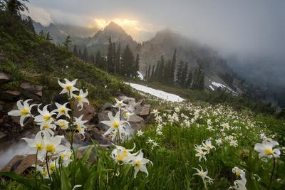 https://imgc.allpostersimages.com/img/posters/washington-mt-rainier-national-park_u-L-Q12T09M0.jpg?p=0