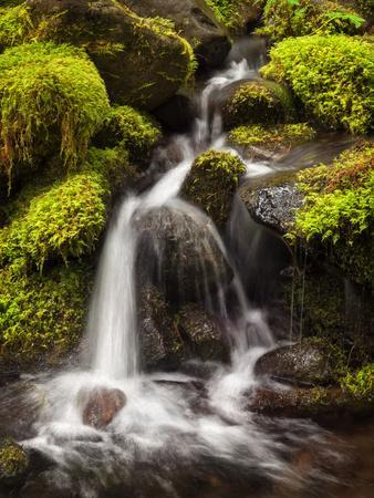 https://imgc.allpostersimages.com/img/posters/washington-olympic-national-park-creek-in-sol-duc-valley_u-L-Q12T0G90.jpg?p=0