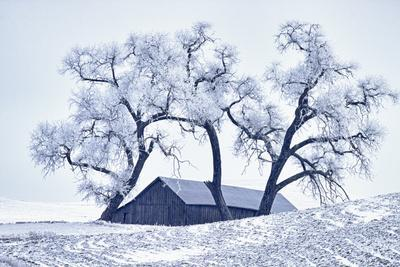 https://imgc.allpostersimages.com/img/posters/washington-palouse-snow-covered-barn-with-old-oak-tree_u-L-Q12T0LG0.jpg?p=0