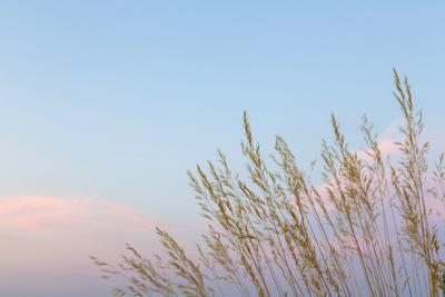 https://imgc.allpostersimages.com/img/posters/washington-seabeck-grasses-at-sunset_u-L-PU3GK90.jpg?p=0