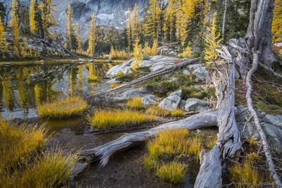 https://imgc.allpostersimages.com/img/posters/washington-subalpine-larch-at-a-tarn-near-horseshoe-lake-alpine-lakes-wilderness_u-L-Q12T1OJ0.jpg?p=0