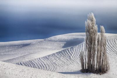 https://imgc.allpostersimages.com/img/posters/washington-trees-in-wheat-field-with-patterns-and-snow_u-L-Q12T8Y70.jpg?p=0