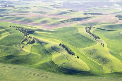 https://imgc.allpostersimages.com/img/posters/washington-whitman-county-aerial-photography-in-the-palouse-region-of-eastern-washington_u-L-Q12T1PU0.jpg?p=0